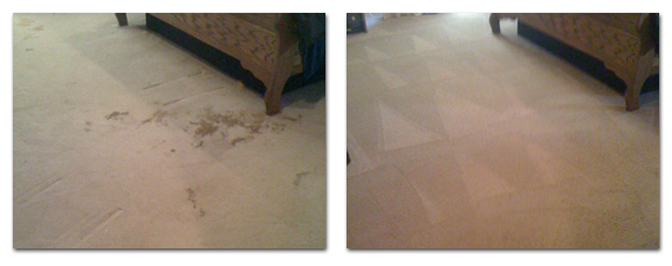 Pet Stain & Odor Service - Before & After